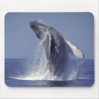 Humpback whale breaching Megaptera Mouse Pads