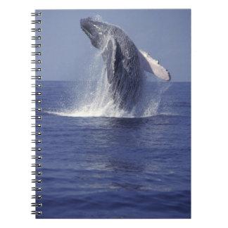 Humpback whale breaching (Megaptera Spiral Note Book