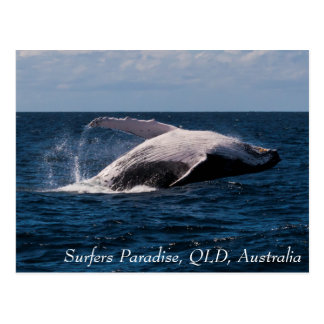 Humpback Whale Breaching Surfers Paradise Postcard