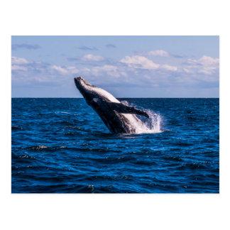 Humpback Whale Breaching Surfers Paradise Postcard