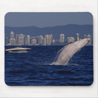 Humpback Whale Calf Breaching Surfers Paradise Mouse Pad