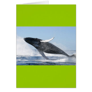 Humpback whale greeting cards