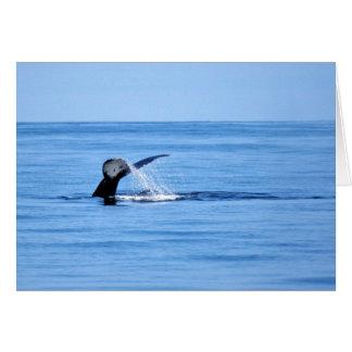 Humpback Whale Fluke Card