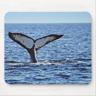 Humpback Whale Fluke II, Victoria, BC Mouse Pad