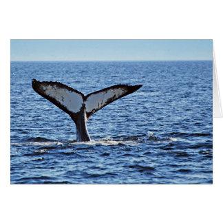 Humpback Whale Fluke, Victoria, BC Greeting Card