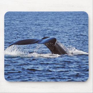 Humpback Whale Fluke, Victoria, BC Mouse Mat