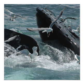 Humpback Whale Invitation