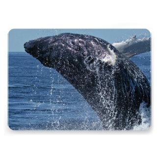 Humpback Whale Invites