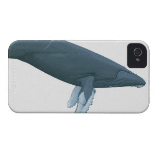 Humpback Whale iPhone 4 Case