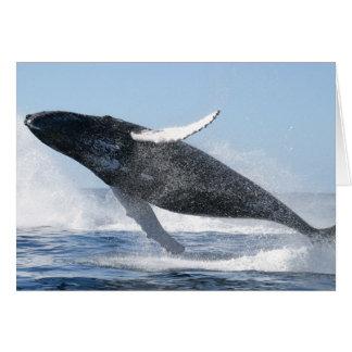 Humpback Whale Jumping High Greeting Card