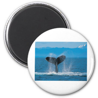 Humpback Whale Fridge Magnet