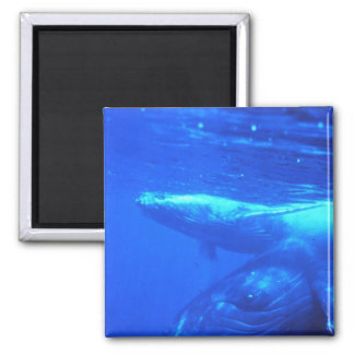 Humpback Whale Mother and Calf Square Magnet