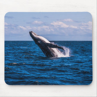 Humpback Whale Pacific Ocean Surfers Paradise Mouse Pad