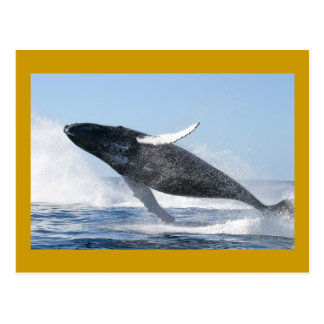 Humpback whale postcards