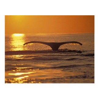 Humpback whale postcard