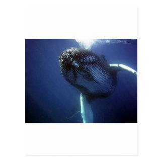 Humpback Whale Postcards
