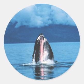 Humpback Whale Rising Round Sticker
