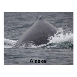 humpback whale s hump postcard