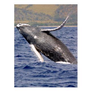 Humpback Whale Splashing Postcard