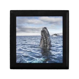 Humpback Whale Spyhops | Hope Bay, Antarctica Gift Box