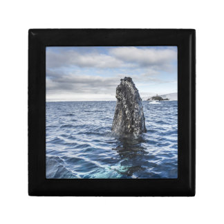 Humpback Whale Spyhops | Hope Bay, Antarctica Small Square Gift Box