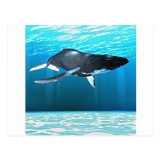 Humpback Whale Swimming Postcard