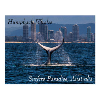 Humpback Whale Tail Fluke Off Surfers Paradise Postcard