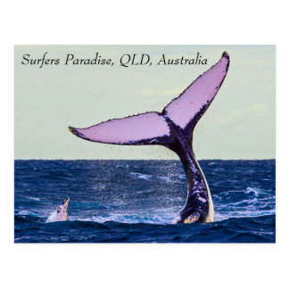Humpback Whale Tail Fluke Postcard