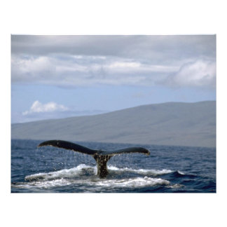 Humpback whale tail, Hawaii 21.5 Cm X 28 Cm Flyer