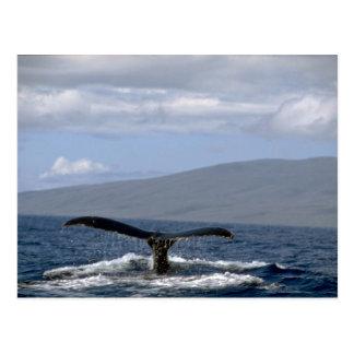 Humpback whale tail Hawaii Post Card