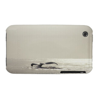 Humpback whale, tail over water surface Case-Mate iPhone 3 cases