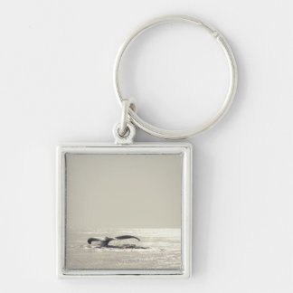 Humpback whale, tail over water surface key ring