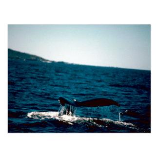 Humpback Whale Tail, Photo by Gary M Stolz, USFWS Postcard