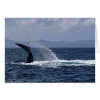 Humpback Whale Tail Splash Note Card