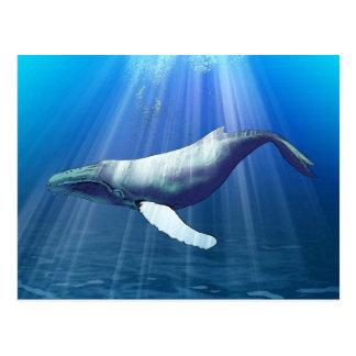 Humpback Whale Watercolor Postcard