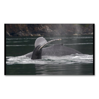 Humpback whales magnetic business cards