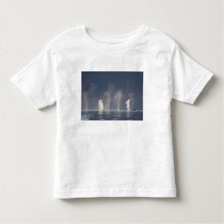 Humpback Whales Megaptera novaeangliae) Toddler T-Shirt