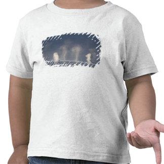 Humpback Whales Megaptera novaeangliae) T Shirt