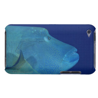 Humphead Wrasse 2 Barely There iPod Covers