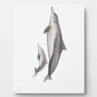 Hunchbacked dolphin of Australia Photo Plaques