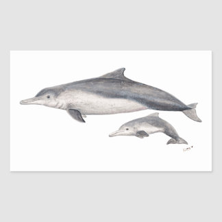 Hunchbacked dolphin of Australia Rectangular Sticker