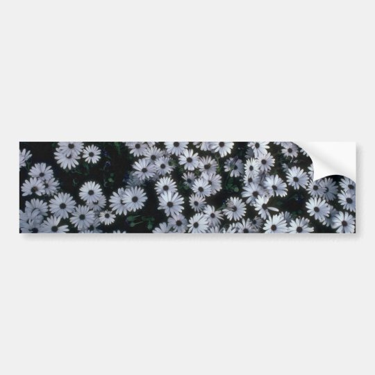 Hundreds Of White Flowers Bumper Sticker