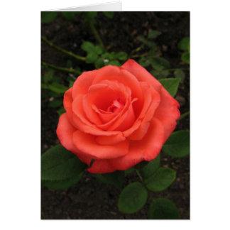 Hungarian-Boldog születésnapot-reddish rose Card