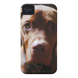Hungarian Vizsla Blackberry Case