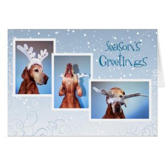Hungarian Vizsla Christmas Card 011
