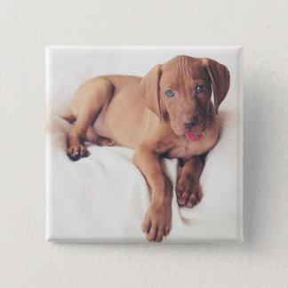 Hungarian Vizsla Puppy 15 Cm Square Badge
