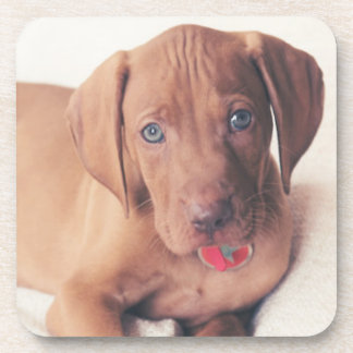 Hungarian Vizsla Puppy Beverage Coaster
