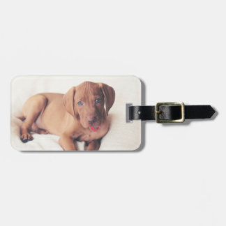 Hungarian Vizsla Puppy Luggage Tag