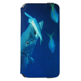Hungry Barracuda Incipio Watson™ iPhone 6 Wallet Case