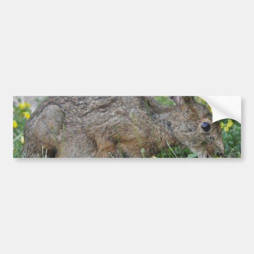 Hungry Bunny Bumper Sticker